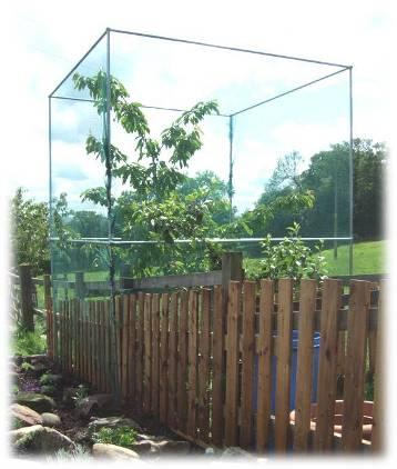 Cherry Tree Cage