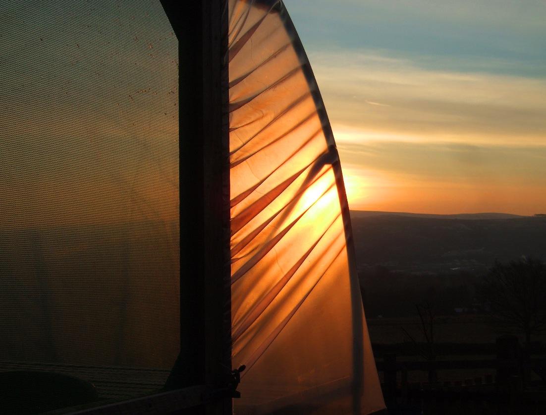 Sunrise_Through_The_Polytunnel