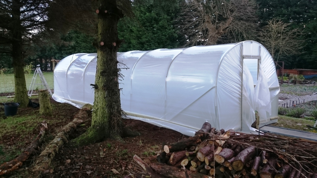 10x30-Polytunnel-nearly-sheeted