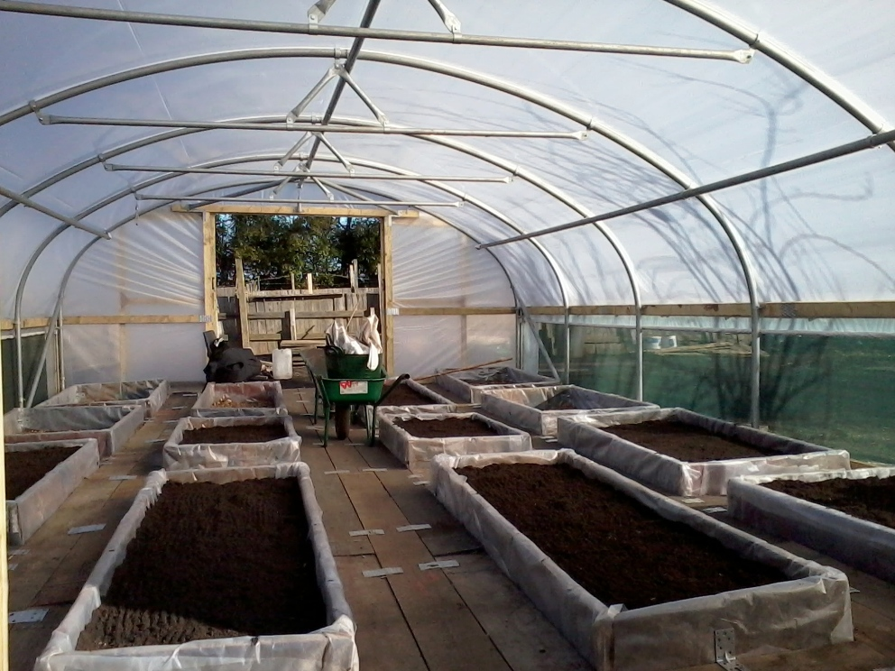 Polytunnel-At-Newcastle-University-Original-Site